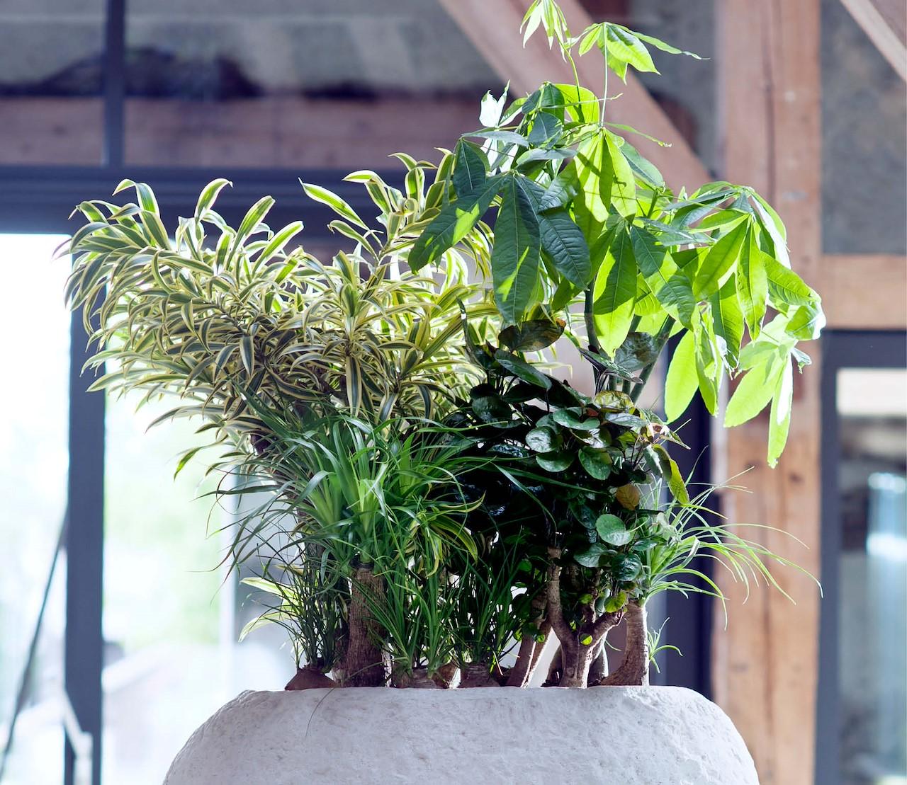 5 onverwoestbare woonplanten