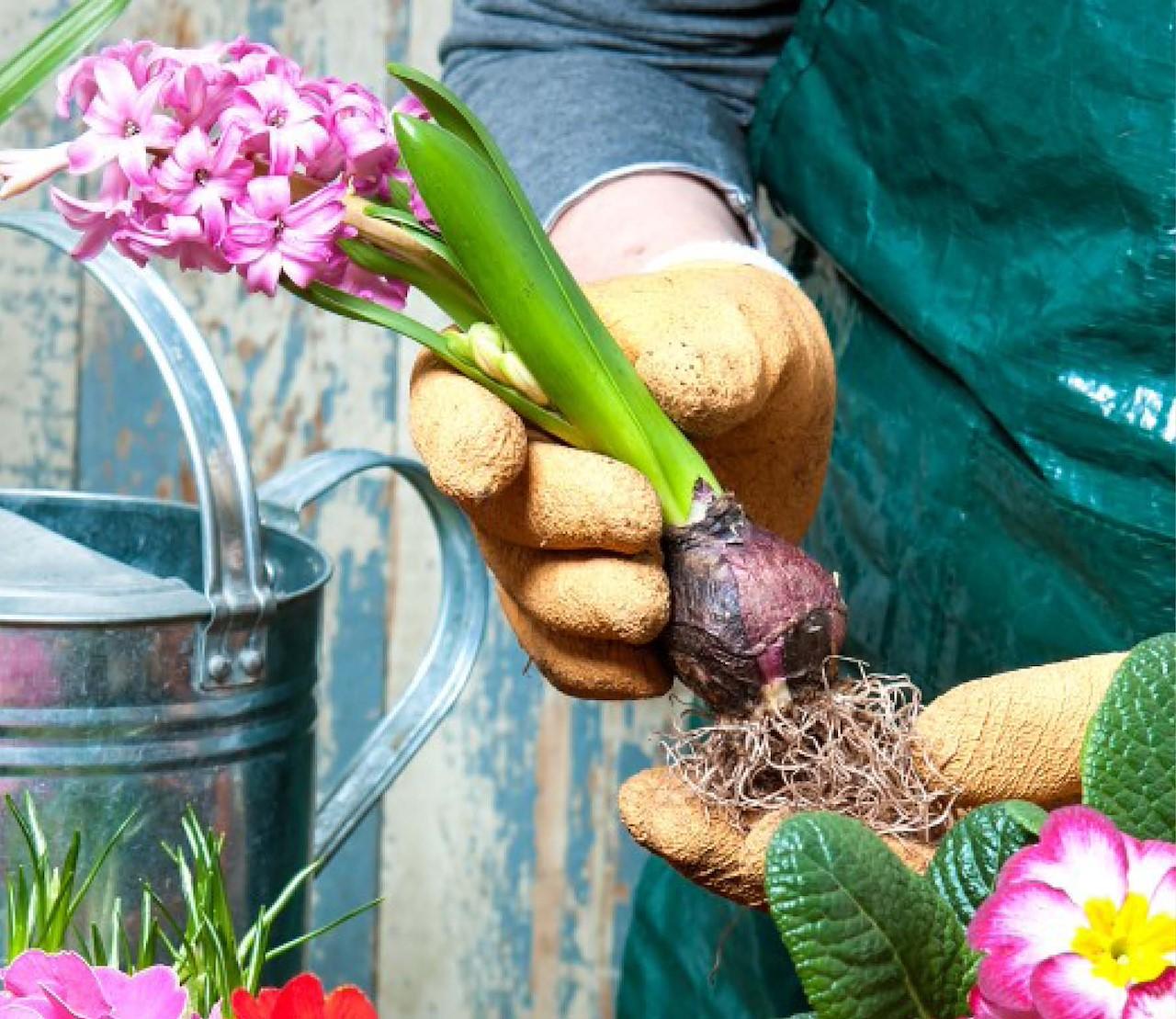 Bloembollen planten: 10 tips