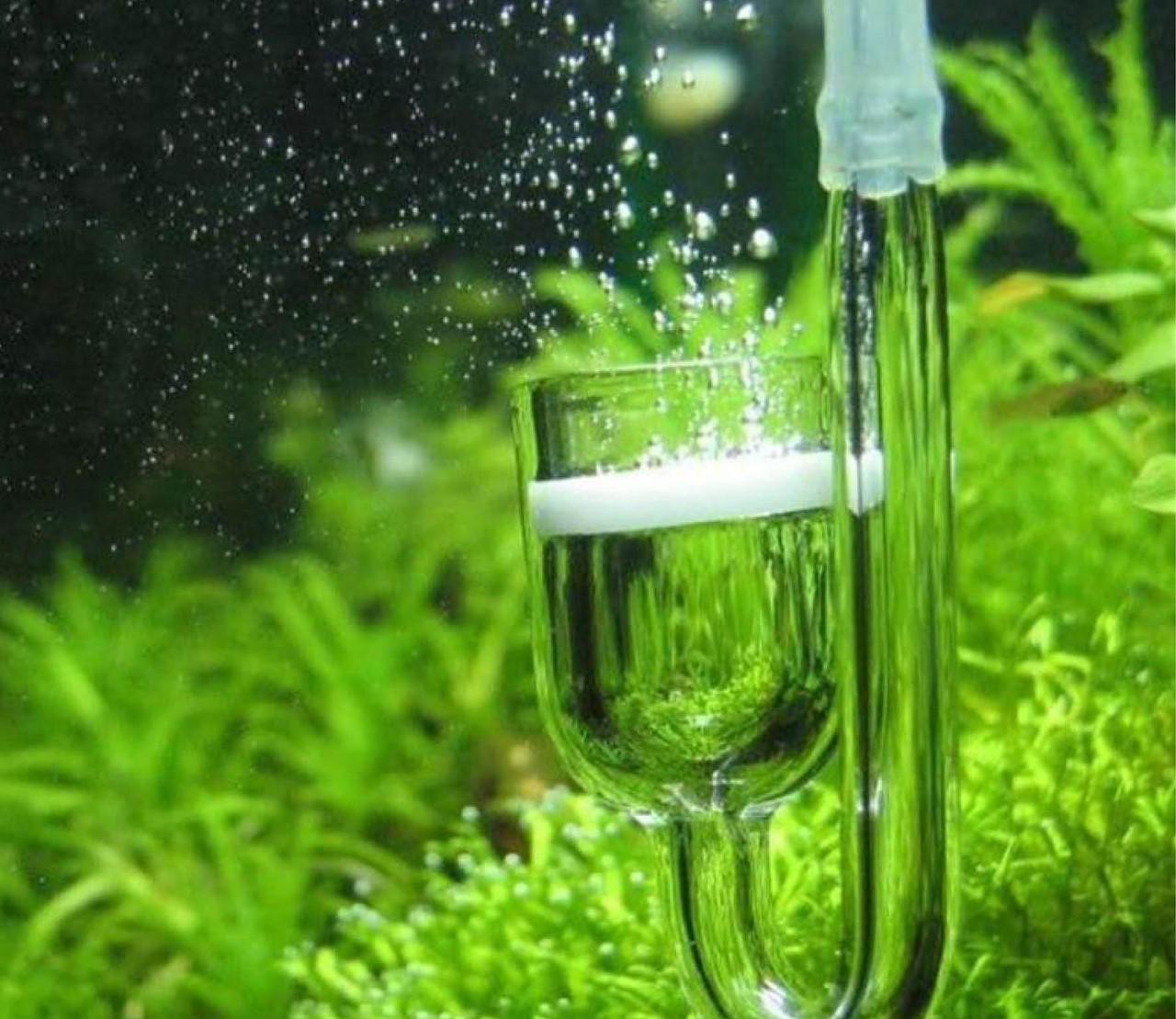 Hoe houd ik de CO2 in mijn aquarium op peil?