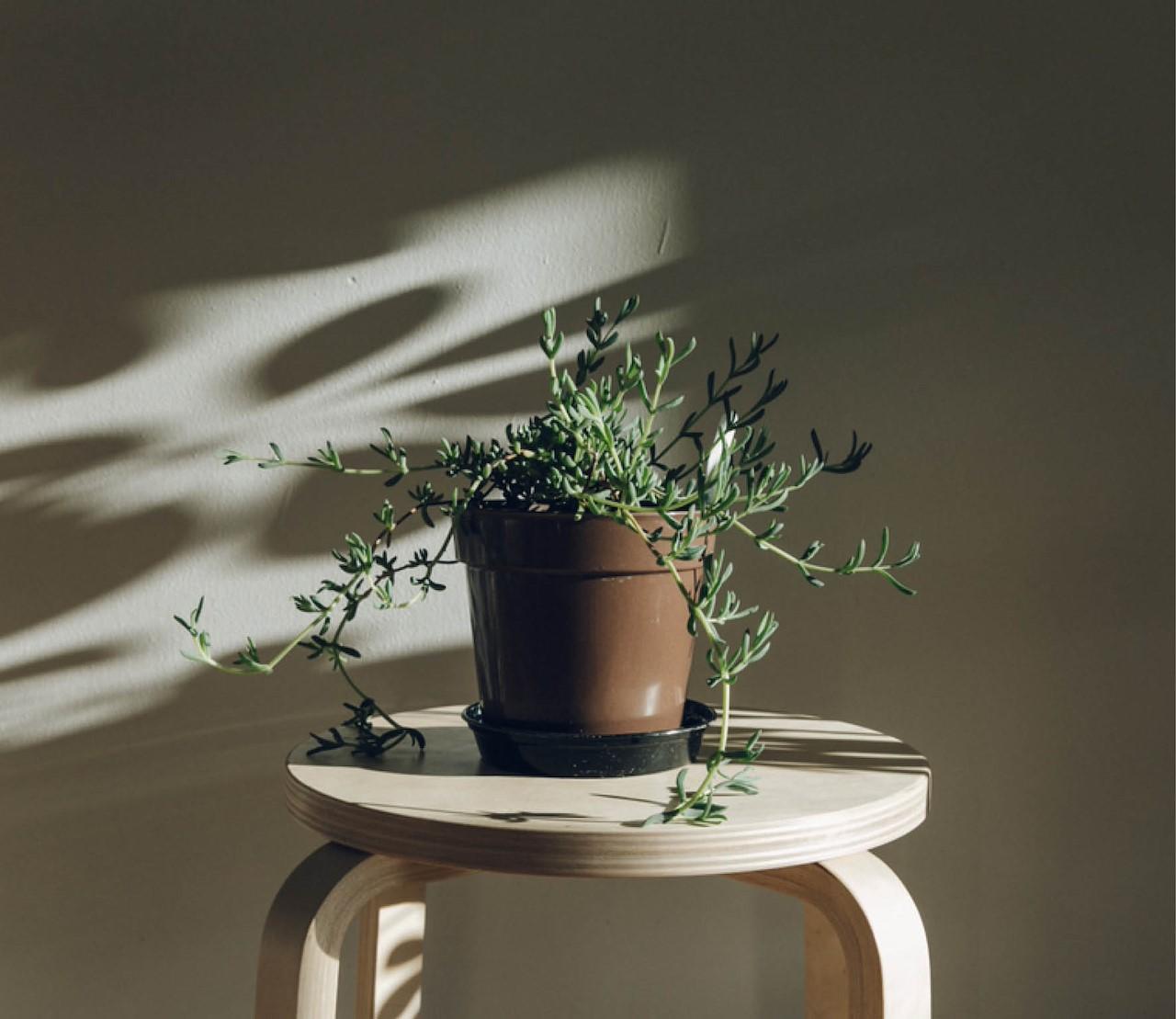 Weinig licht? Deze kamerplanten houden van donker.