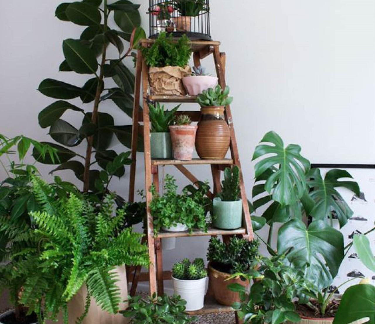 Een kamerplant voor elke plek