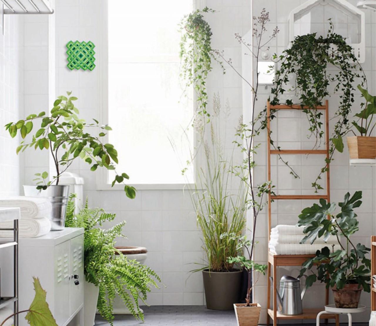 De leukste planten voor in de badkamer