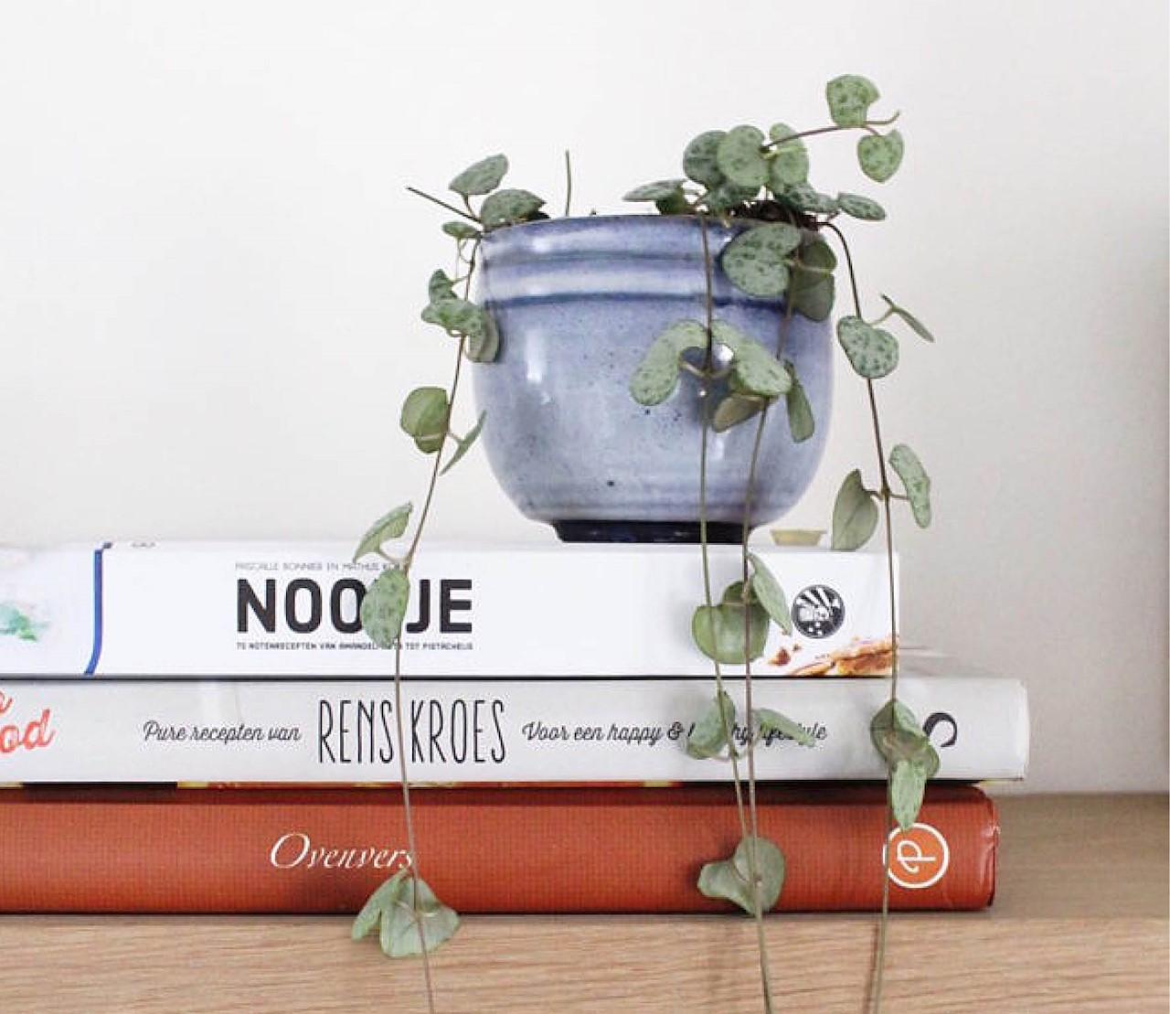 Deze 5 kamerplanten zijn de beste kotgenoten
