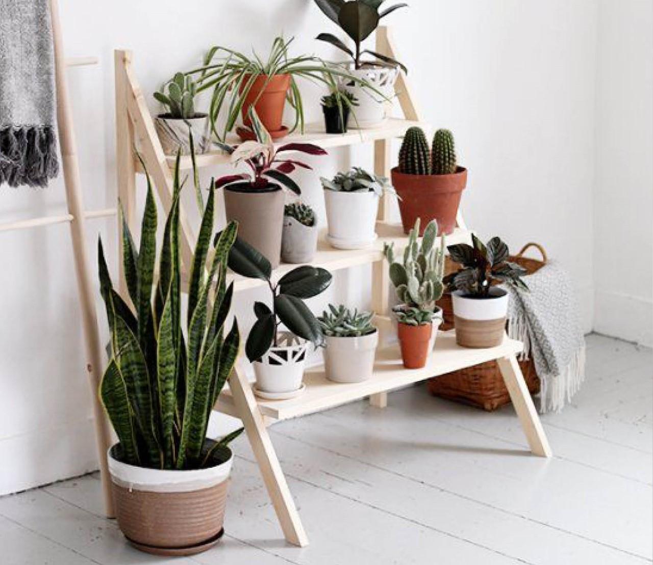 originele manieren om je kamerplanten te presenteren