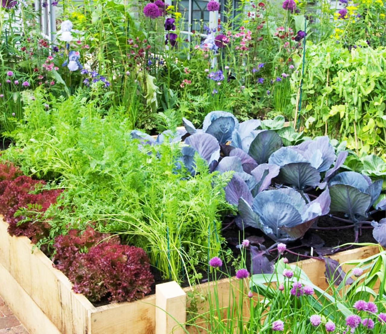 Moestuin juni: oogsten & wissel van de wacht