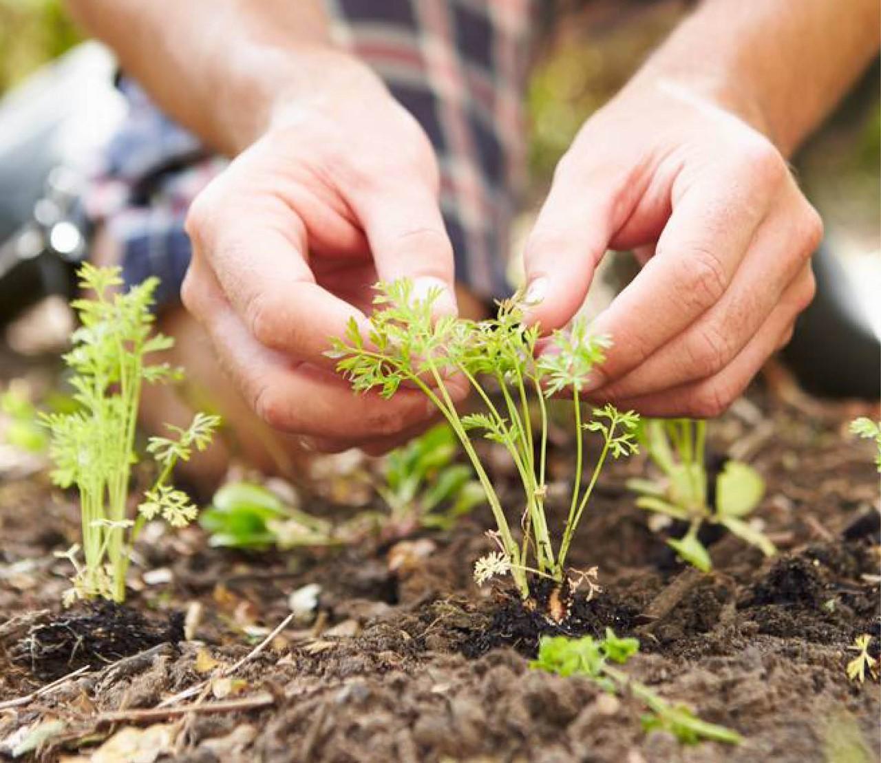 Moestuin mei: met een gerust hart planten