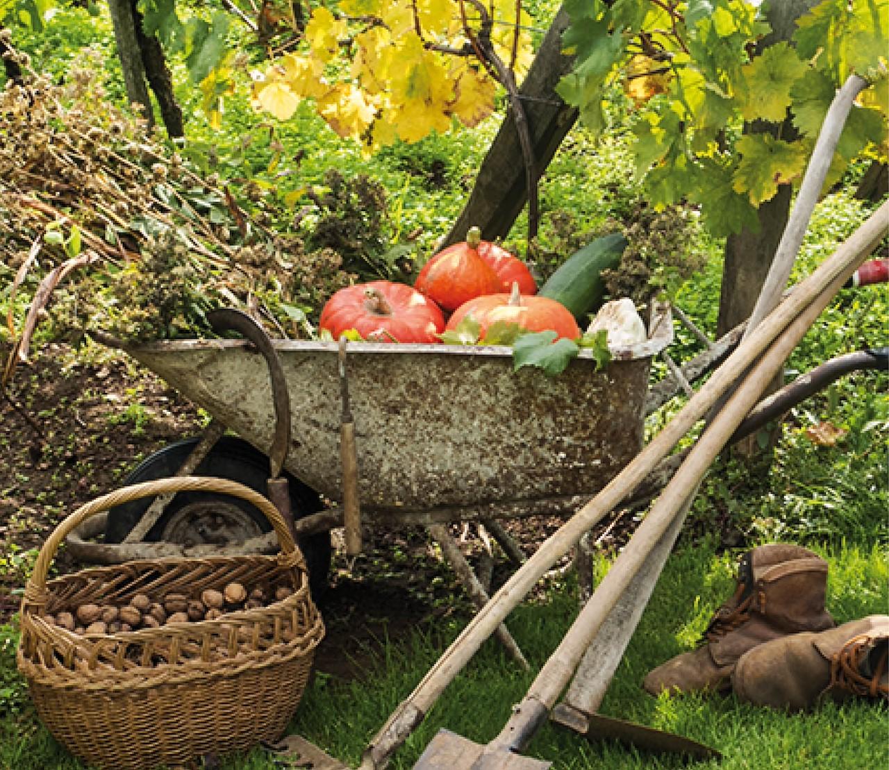 Moestuin oktober: uitbollen en voorbereiden op de winter