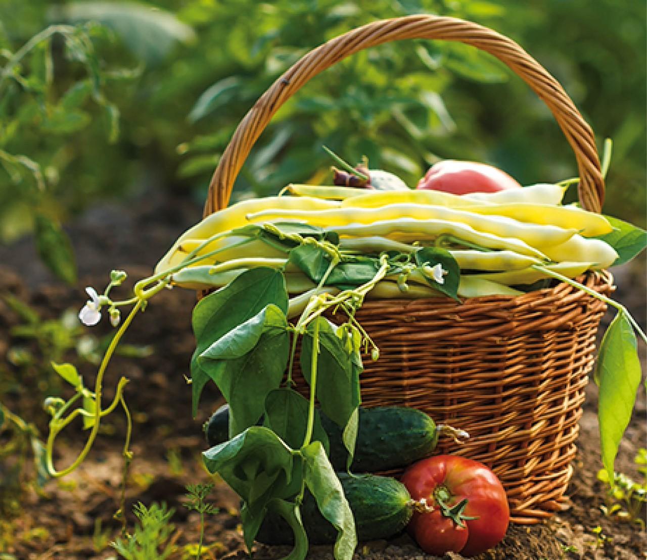 Moestuin september: de zomer oogsten & de herfst zaaien