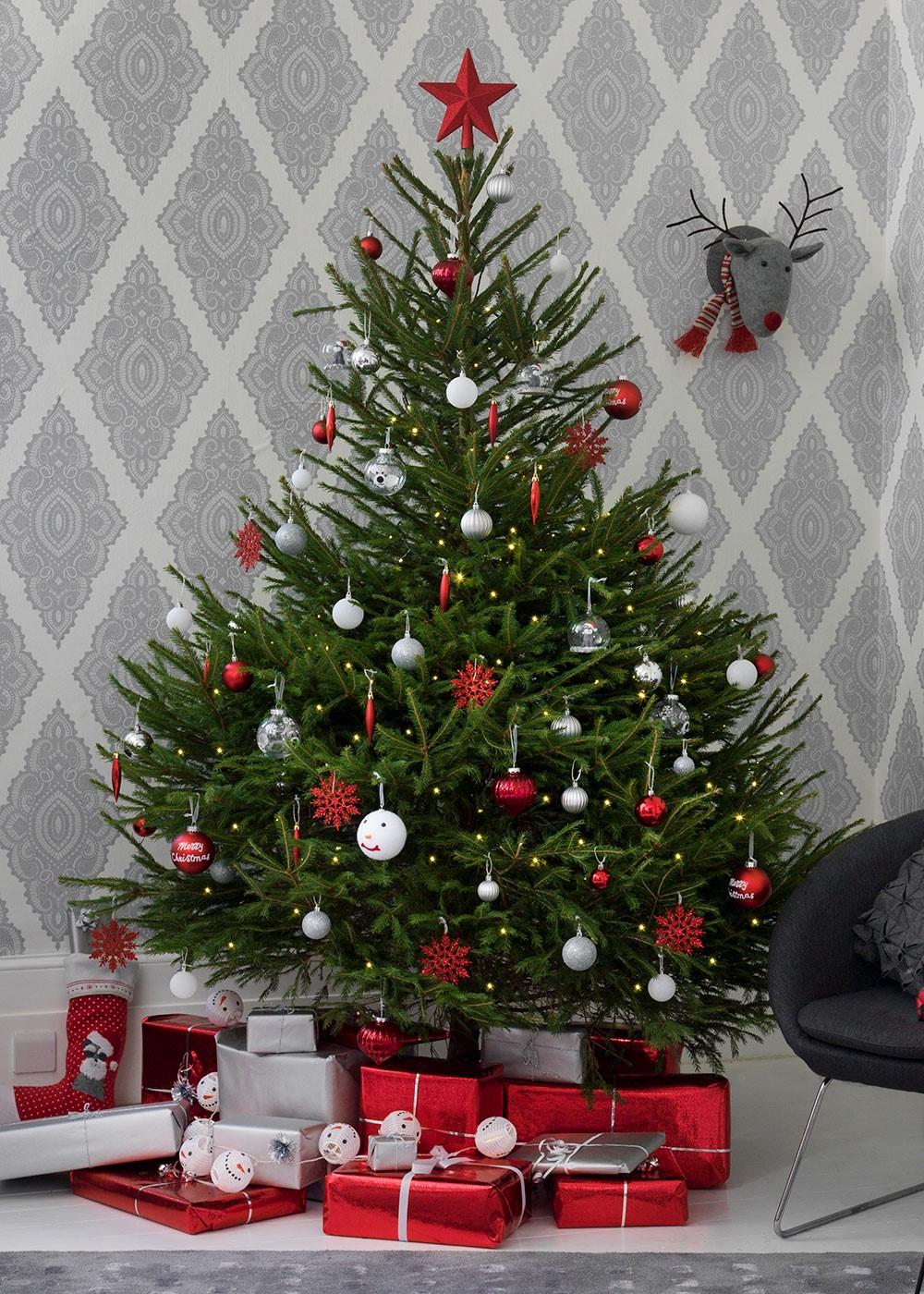 Echte kerstbomen: welke past het best bij mij?
