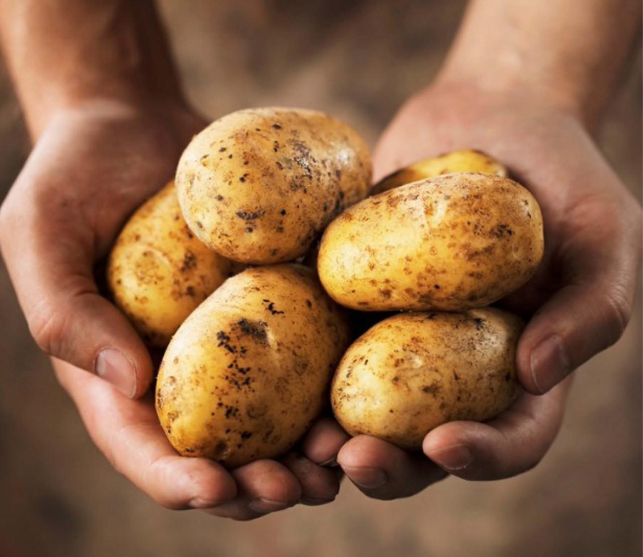 Kweek je eigen aardappelen!