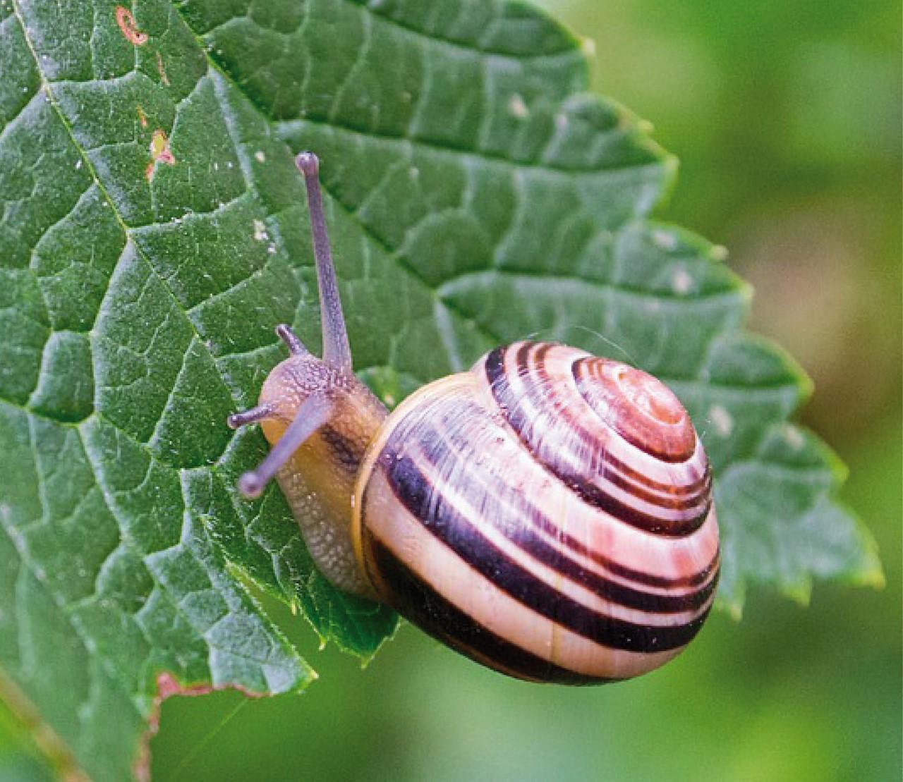 10 planten die slakken NIET lusten