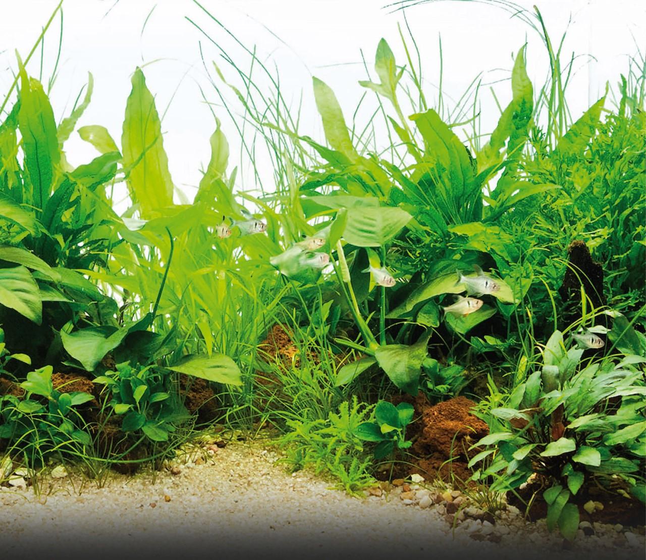 Aquariumplanten verzorgen doe je zo