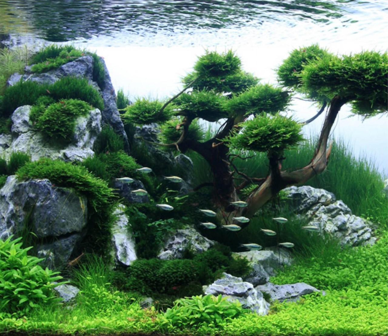 Maak van je aquarium een echte onderwaterwereld