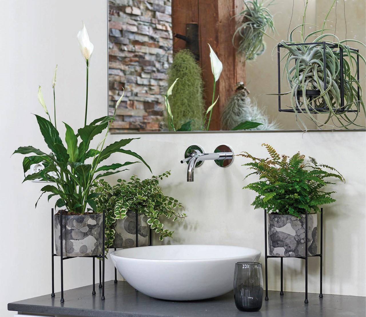 Maak van je badkamer een oase met deze planten