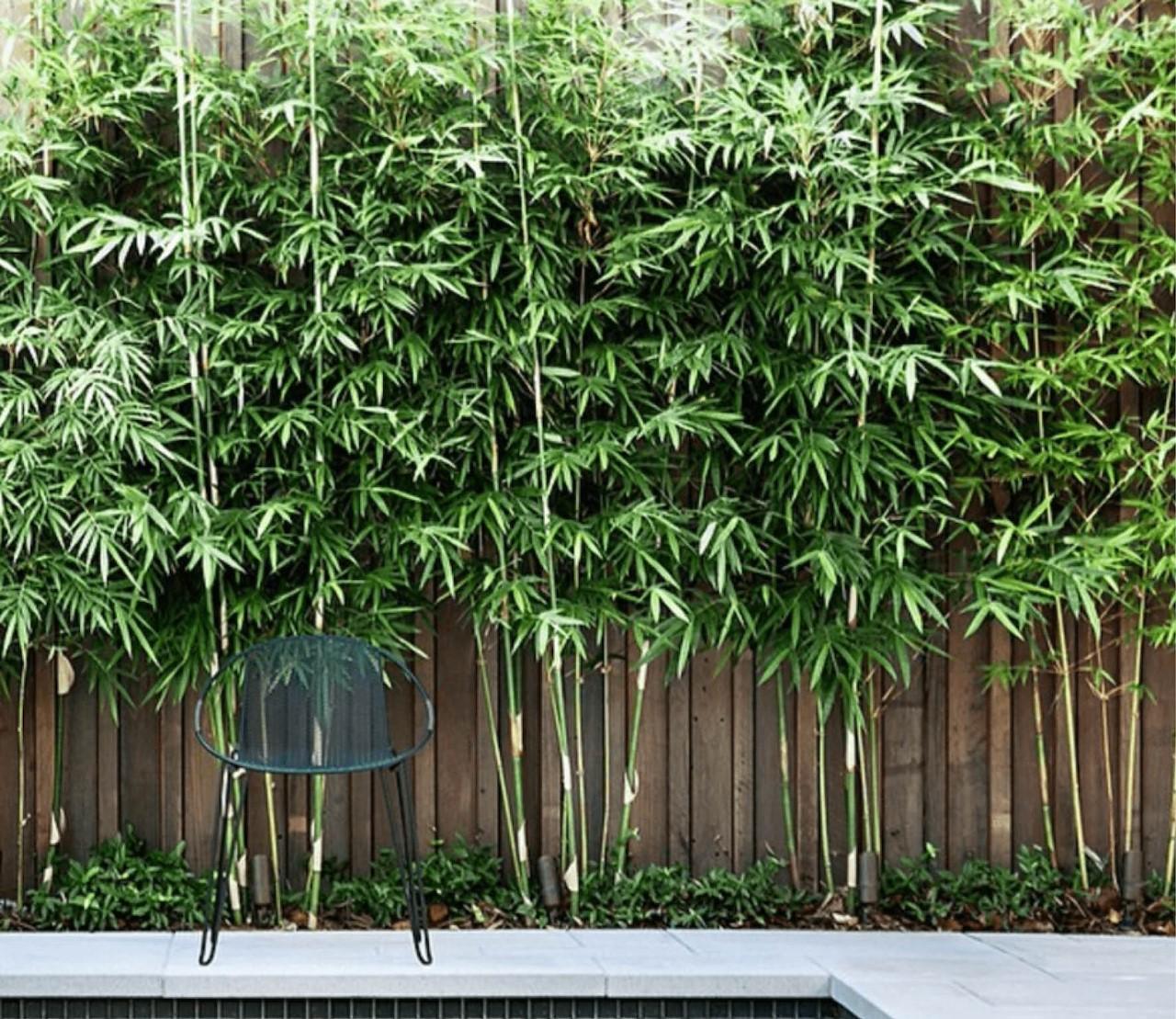 Bamboe of siergras?