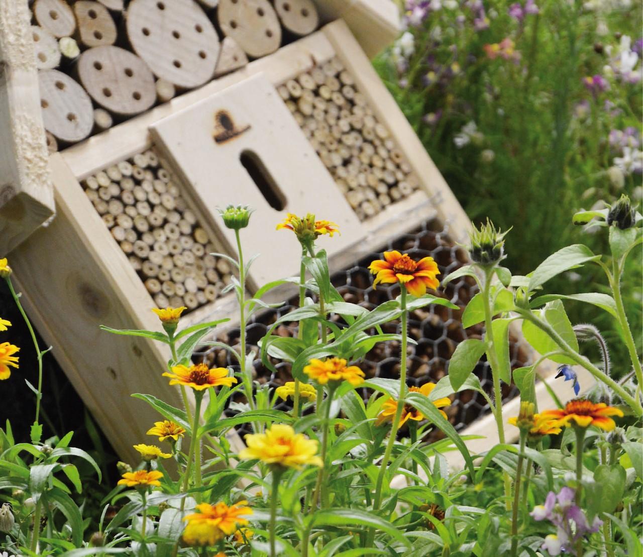 Maak je tuin bij-vriendelijk