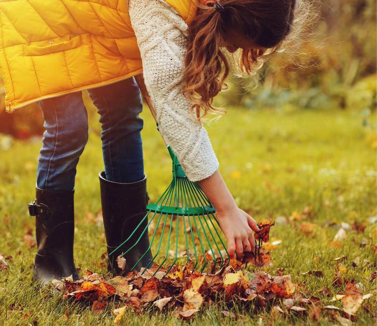 Afgevallen bladeren, wat doe je er mee?