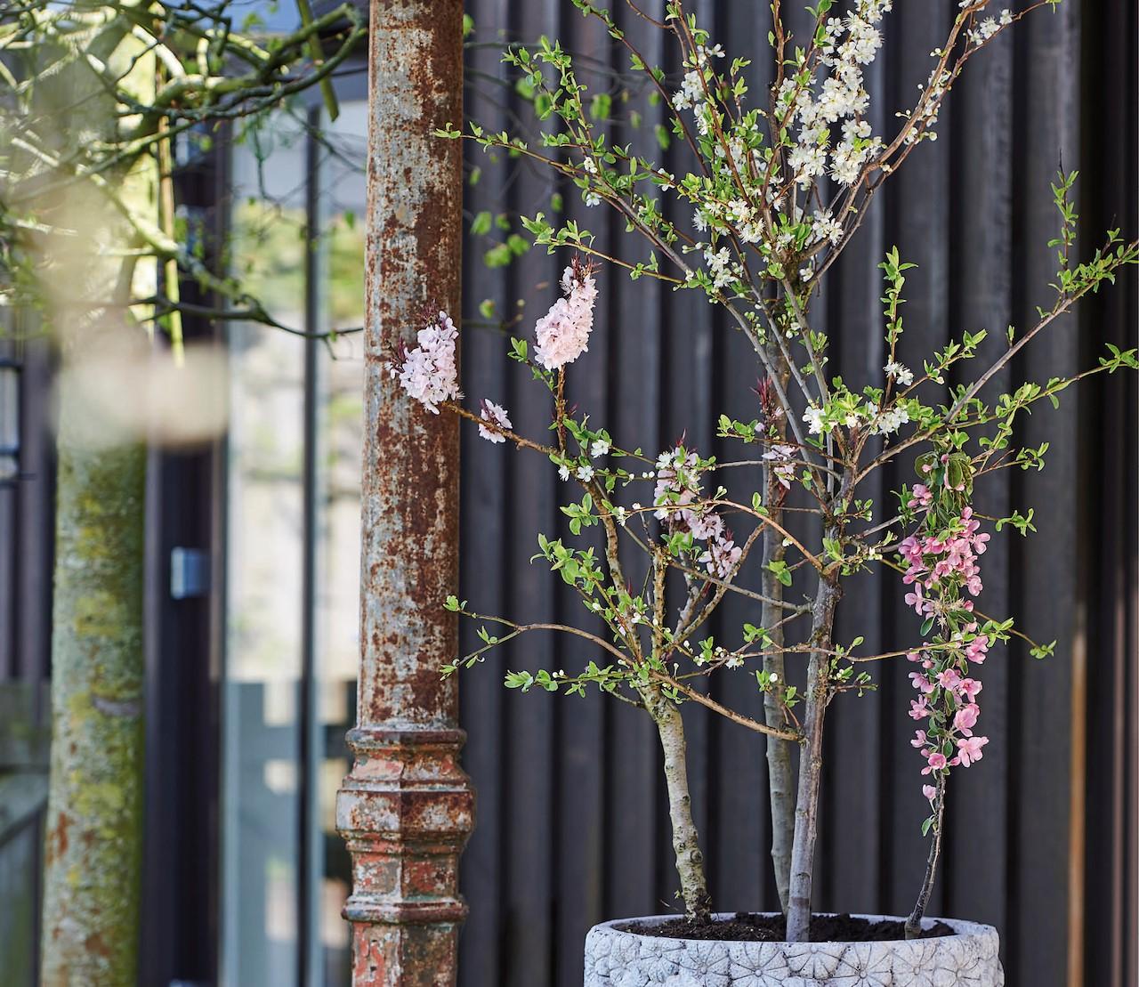 De lente hangt in de bloesembomen