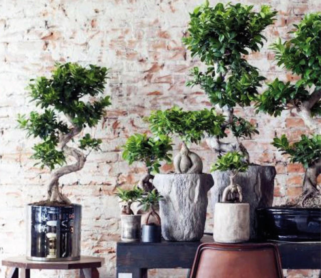 Bonsai: zo verzorg je deze mini-boompjes