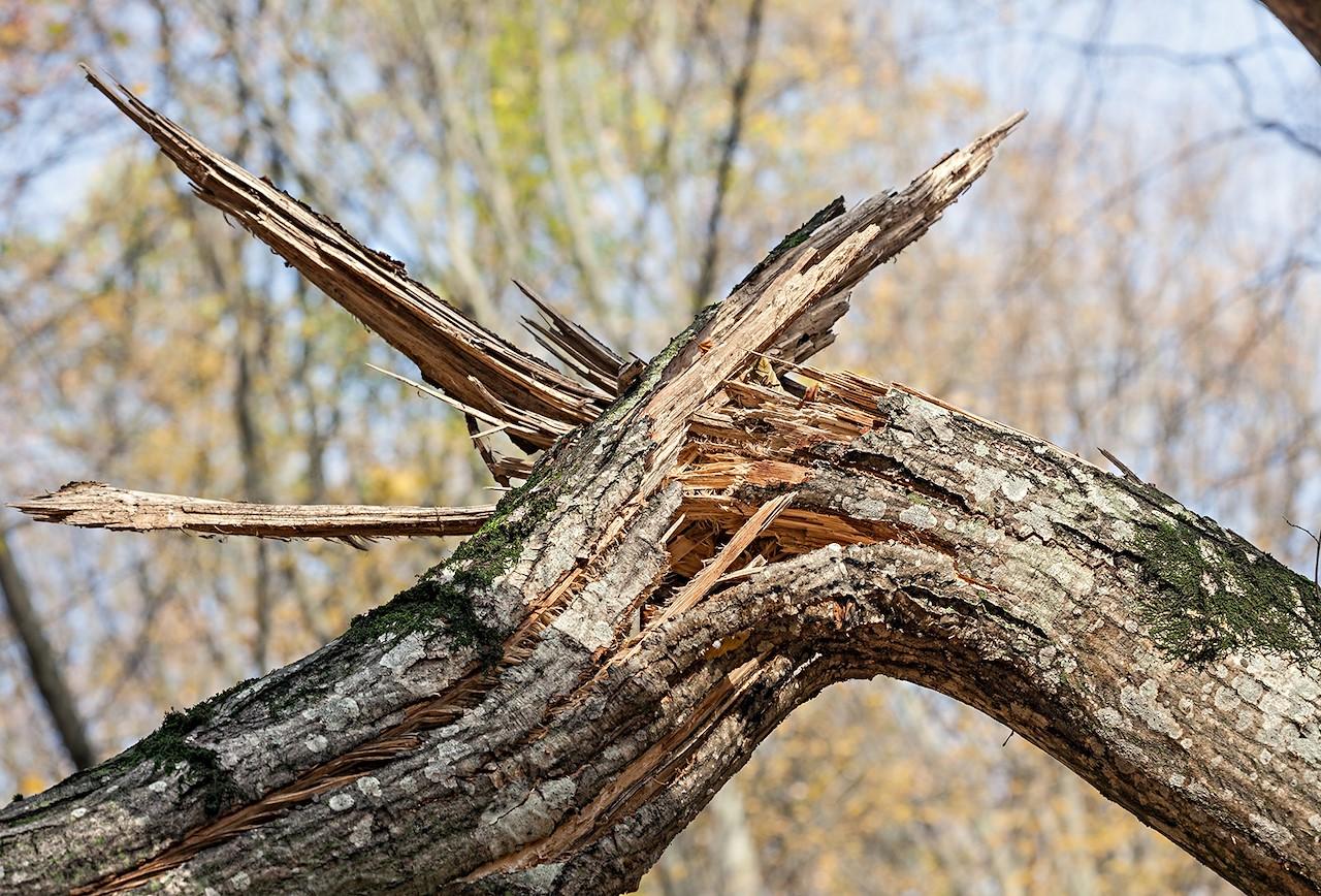 Stormschade aan je bomen: wat nu?