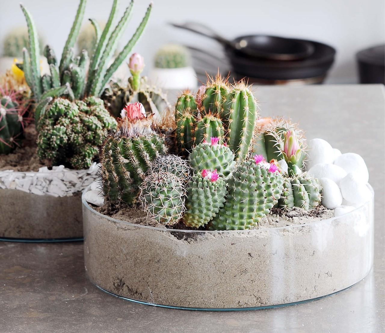 Cactussen: aaibaarder dan je denkt