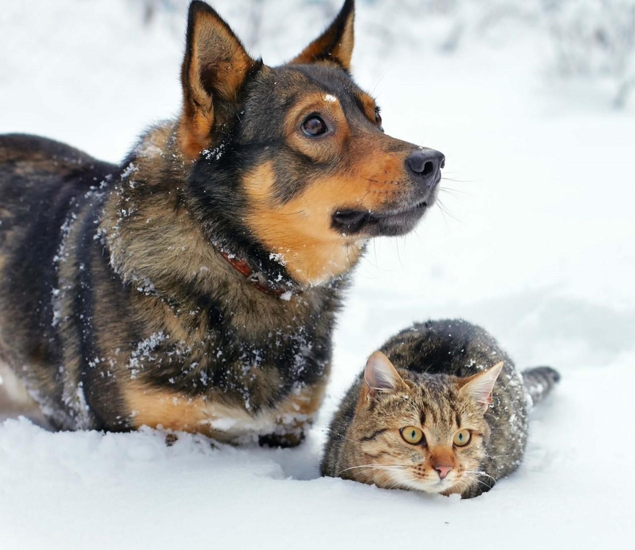 Bescherm je huisdieren tegen de kou!