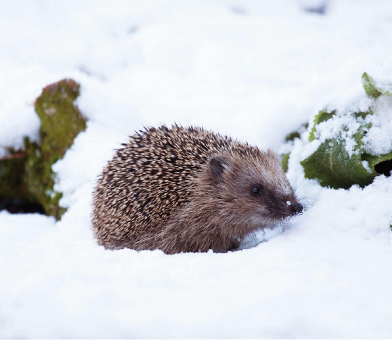Zo help je de dieren de winter door