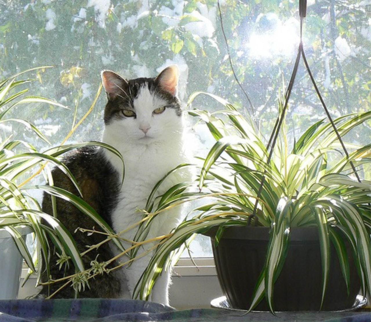 Groene dierenvrienden: 5 kamerplanten voor wie huisdieren heeft