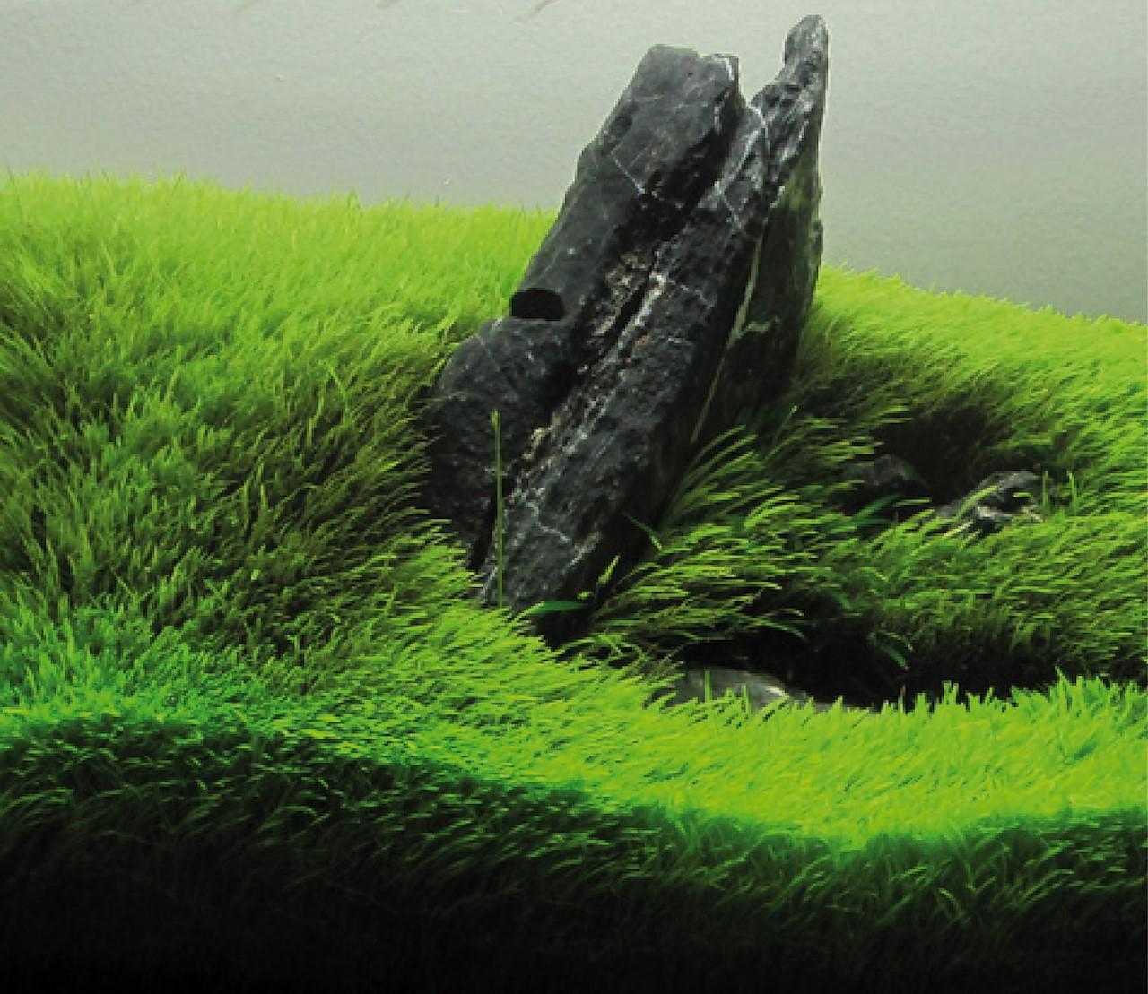 Een groene begroeide bodem dankzij de Dry Start-methode
