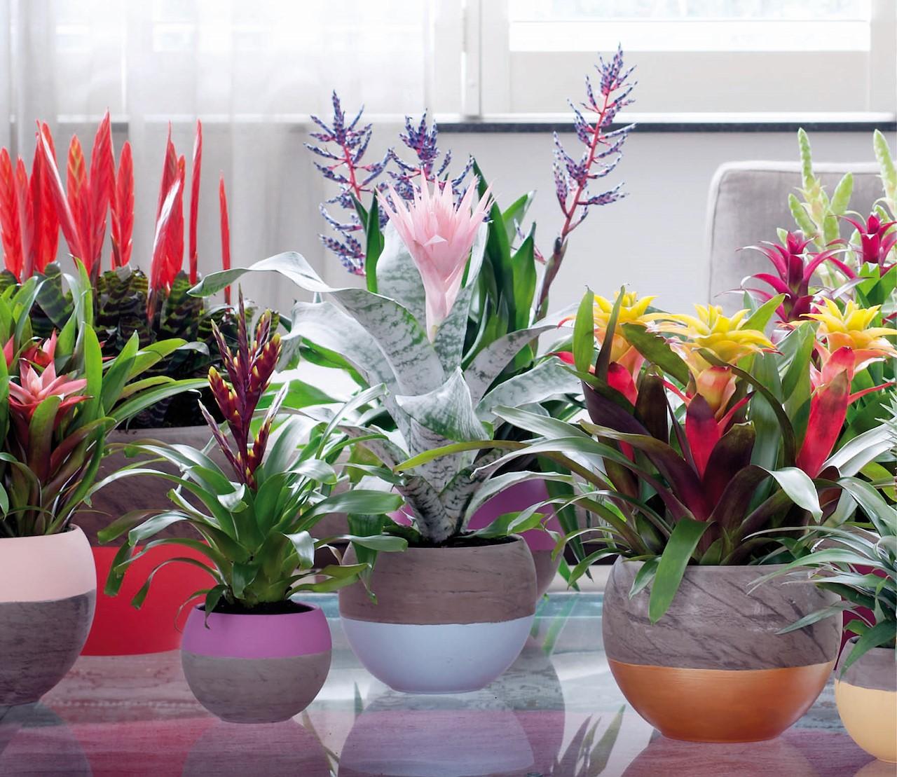Vijf kamerplanten met een exotische look