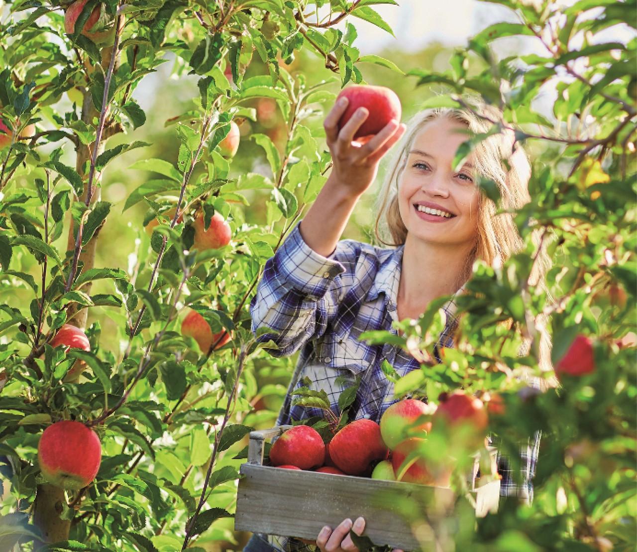 Fruit plukken & bewaren: 8 tips