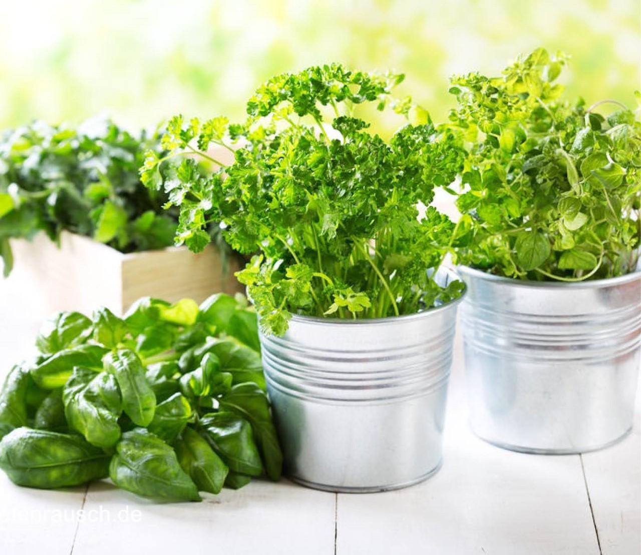 Een zomer lang groene kruiden
