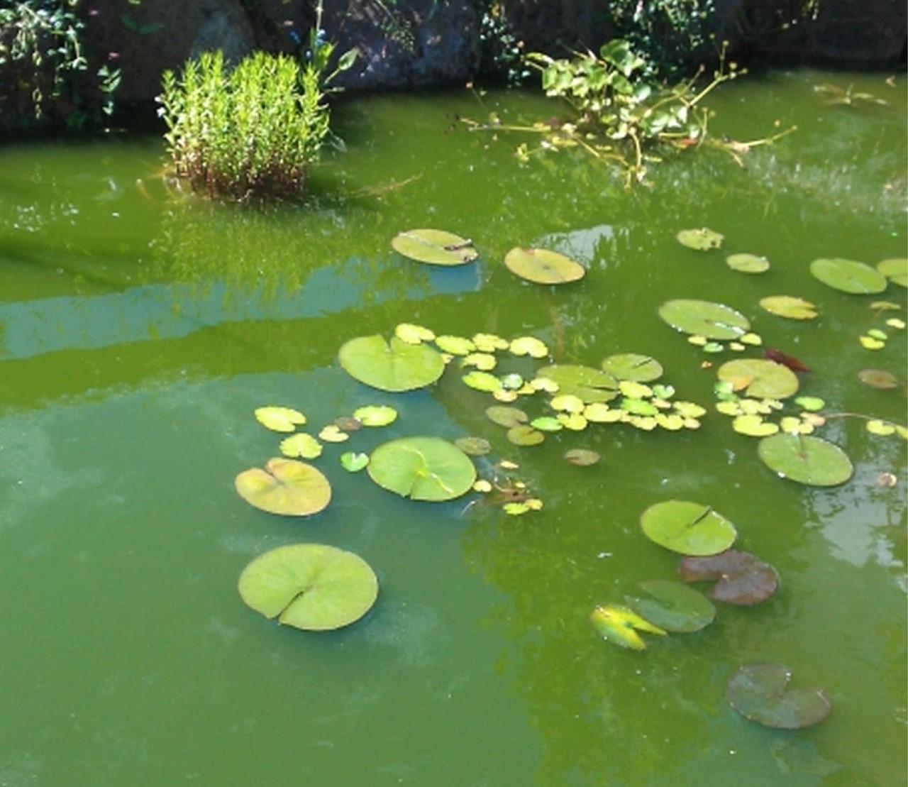 Groen vijverwater, wat nu?