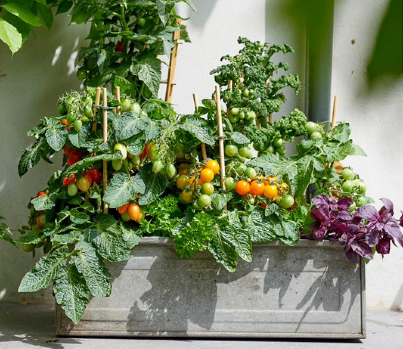 Wat dacht je van groenteplanten op je terras?