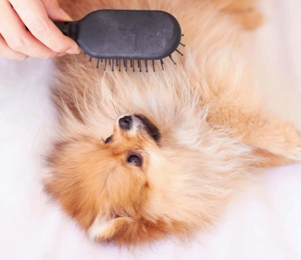 10 tips voor een gezonde hondenvacht