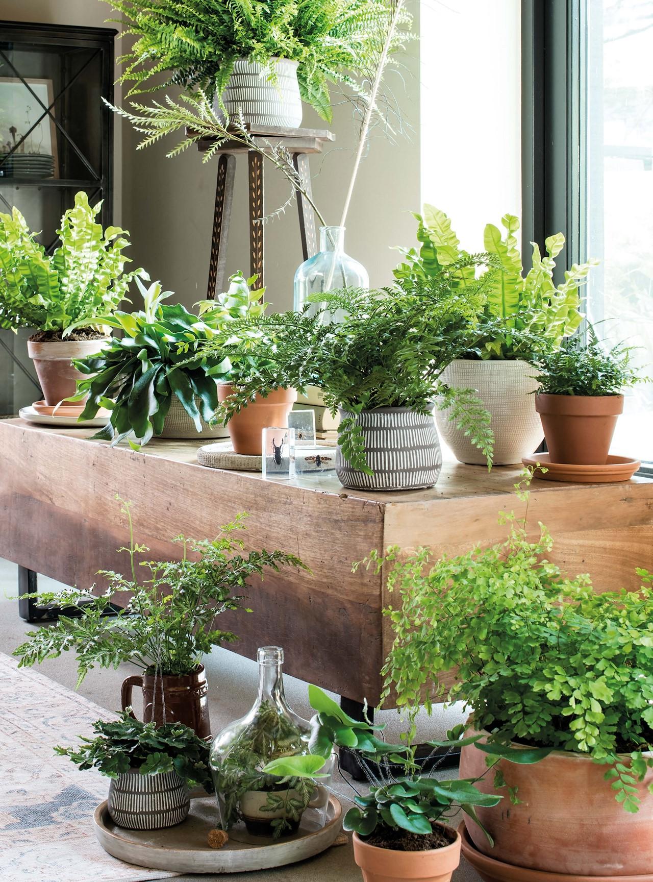 Je kamerplanten in topvorm de winter door!