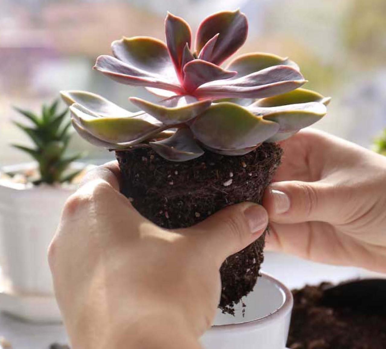 Tips & tricks: kamerplanten inpotten