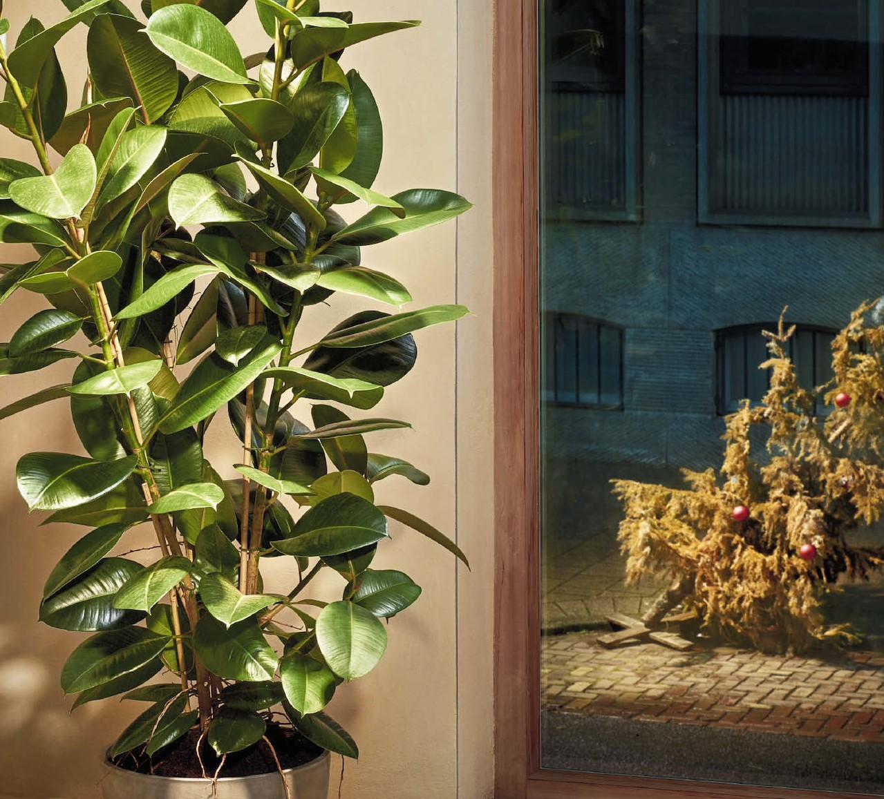 Ander en beter: 5 kamerplanten die je kerstboom doen vergeten