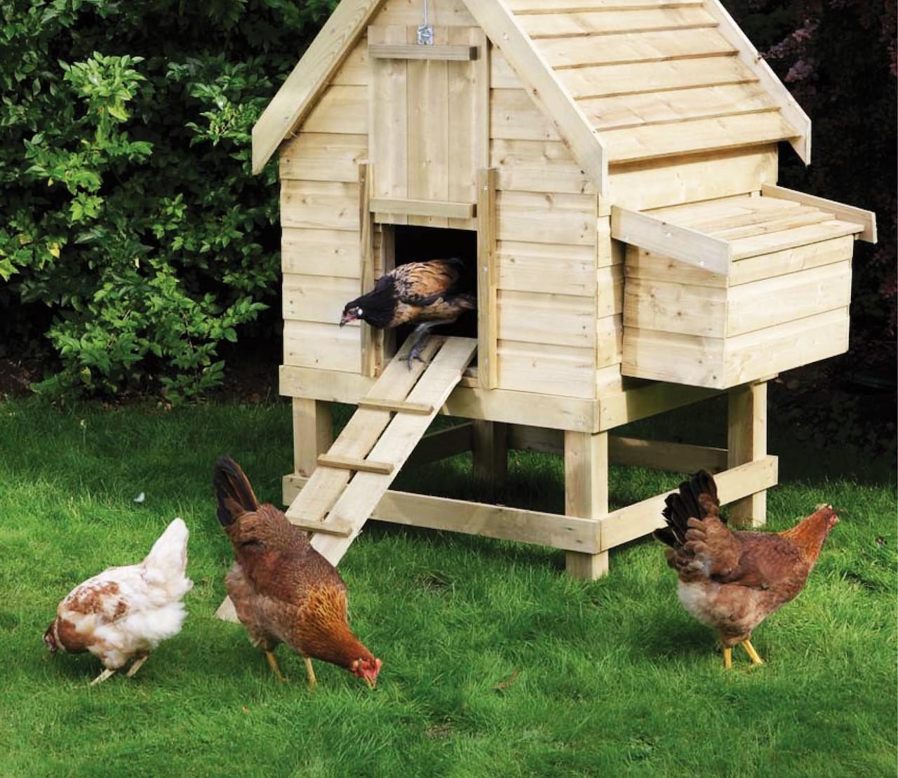 Een driesterren verblijf voor je kippen