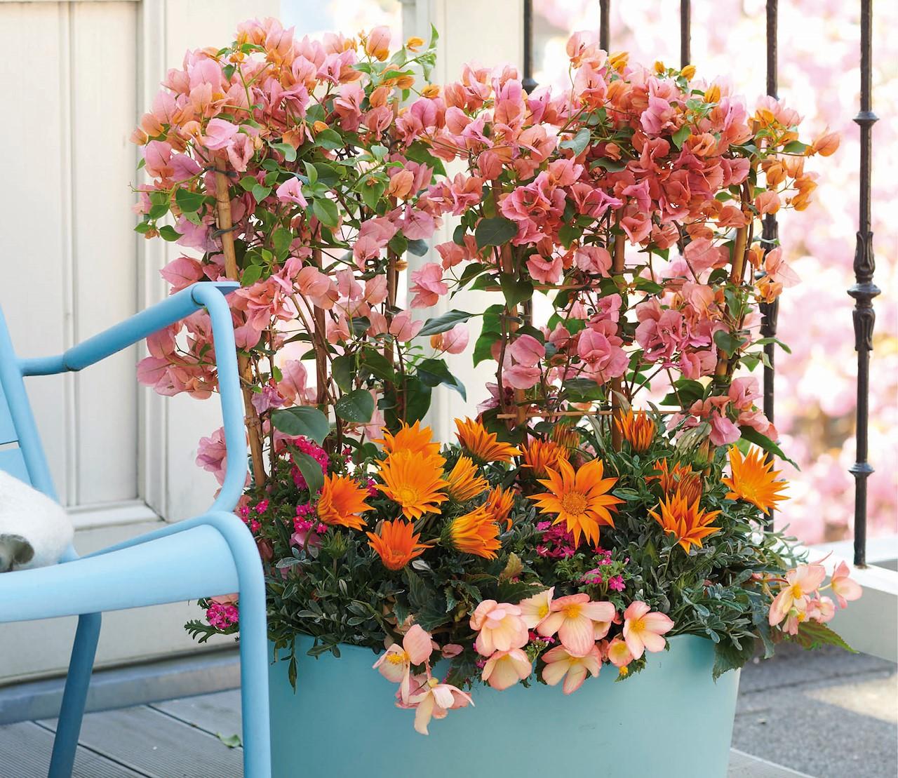 Vrolijke tinten & prachtige bloemen met de komst van de Kleurbrengers