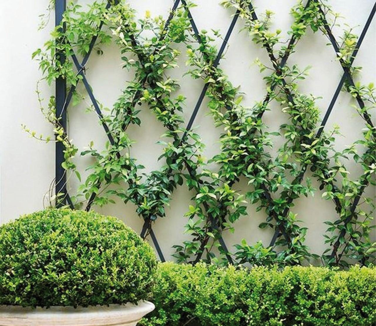 Klimplanten: zo laat je ze klimmen
