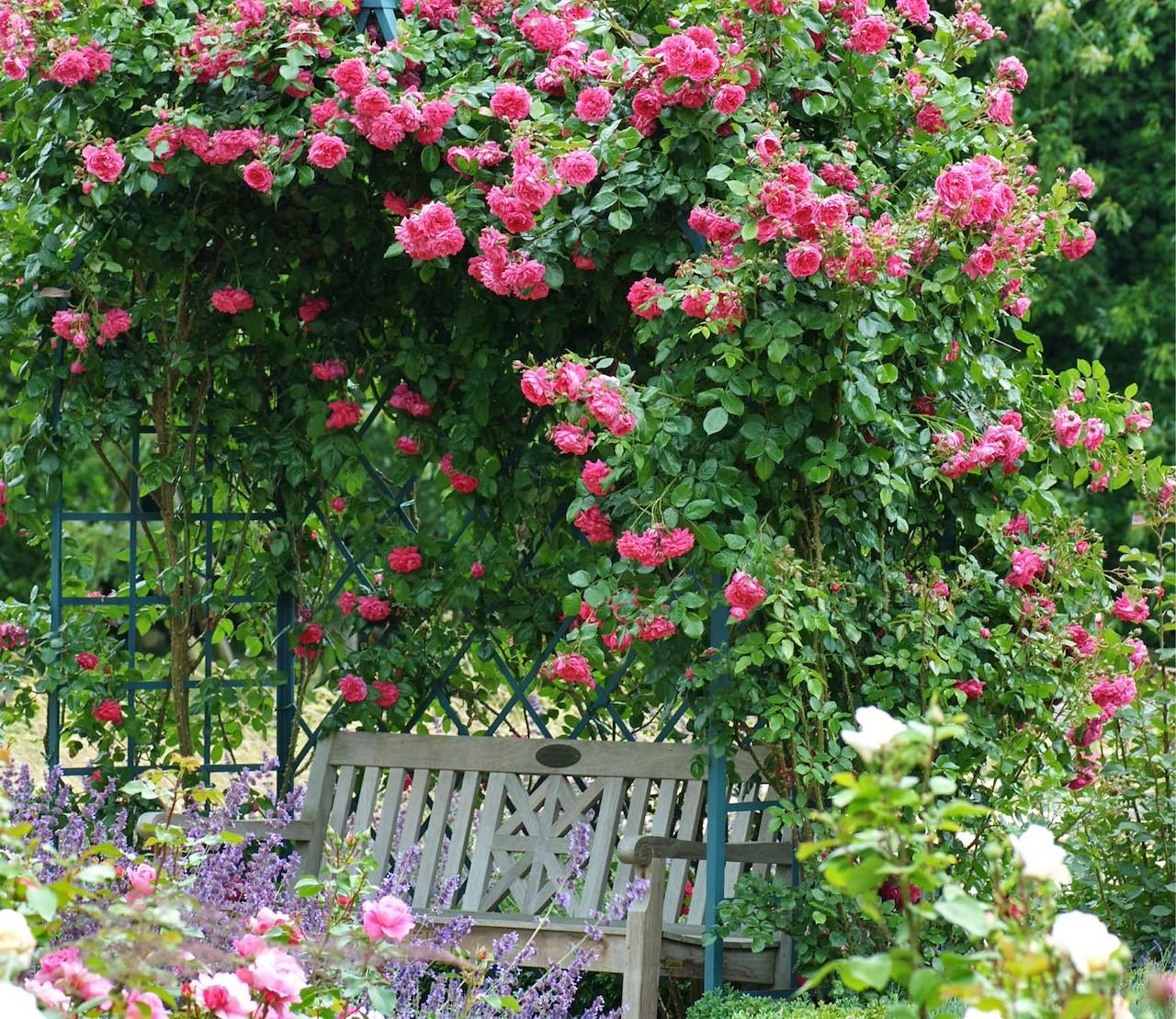 Fleur je tuin op, met klimrozen