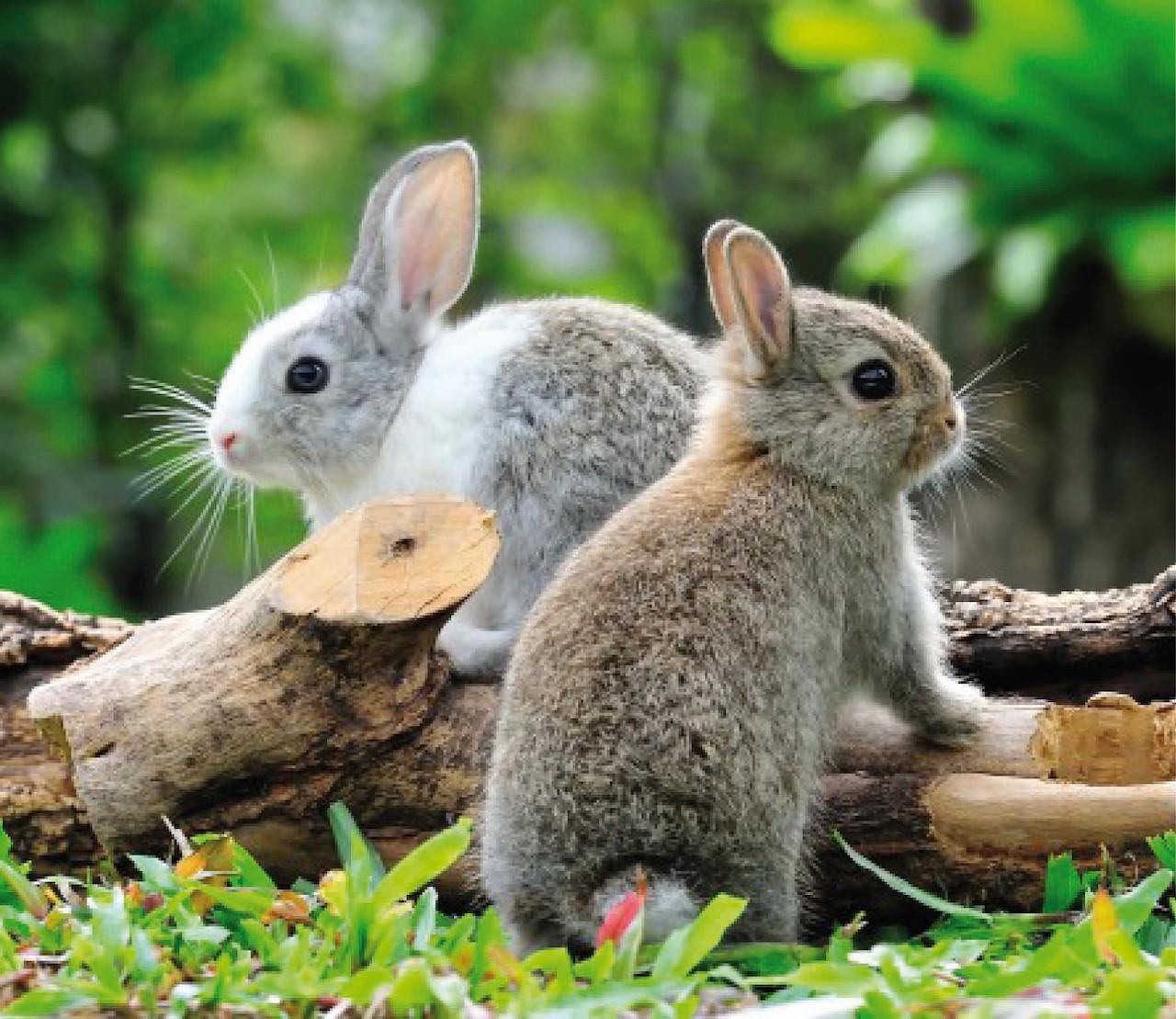 Zo voelt je konijn zich helemaal thuis