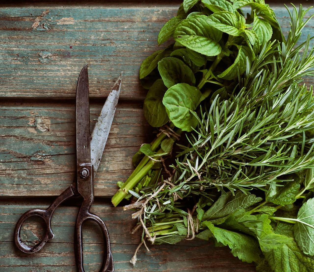 Kruiden oogsten, drogen & bewaren