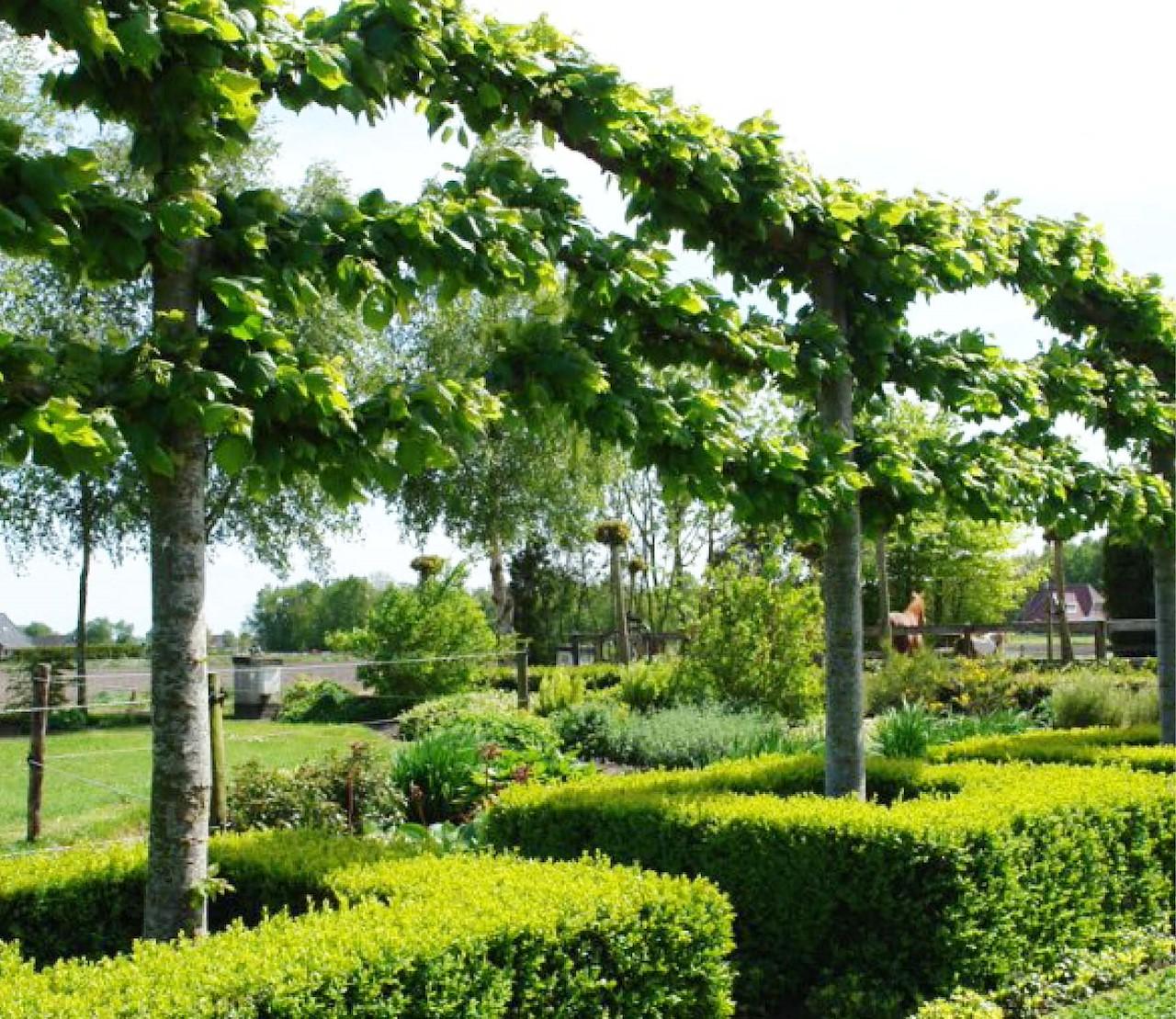 Leibomen: een haag op hoogte
