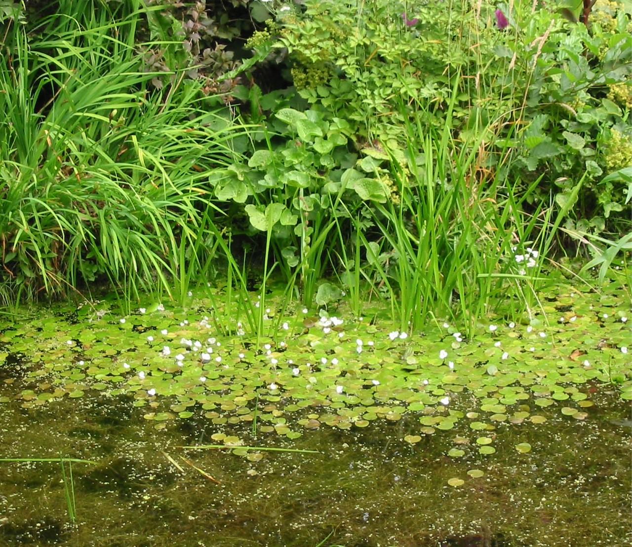 De mooiste planten voor je vijver