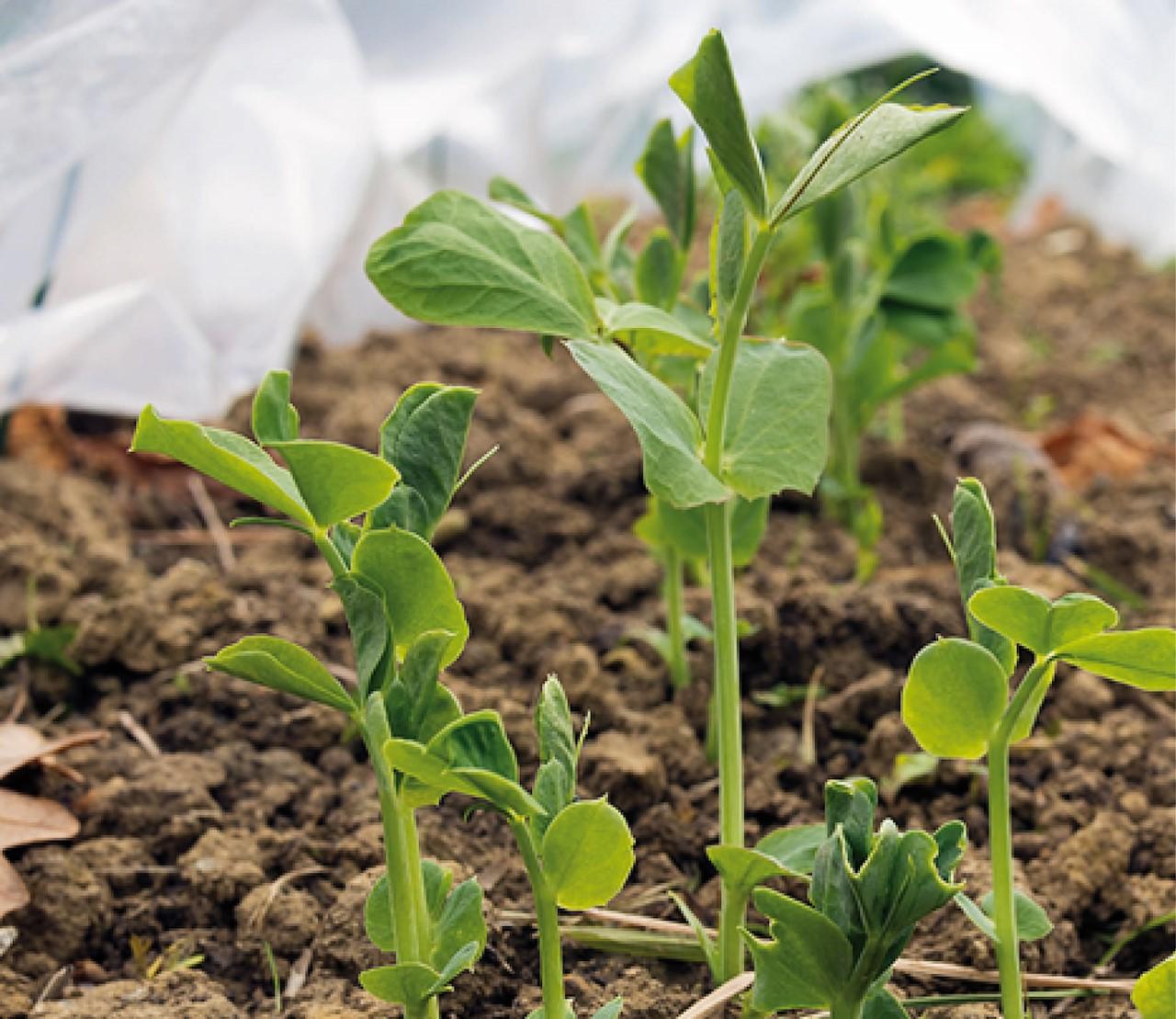 Tips om je (moes)tuin te beschermen tegen nachtvorst