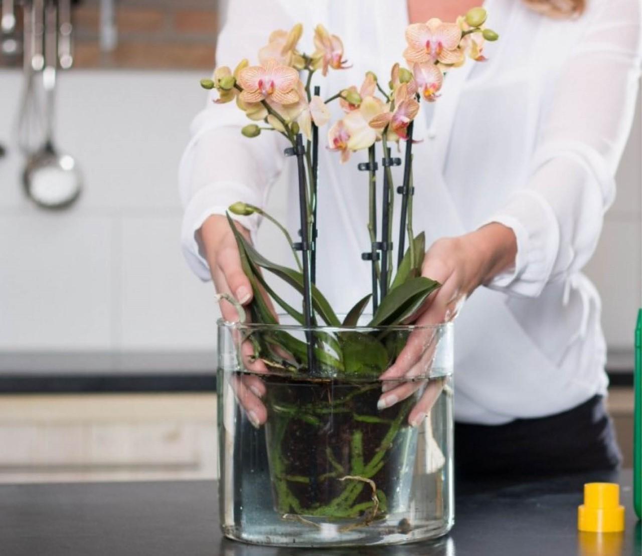Eerste hulp bij orchidee-problemen