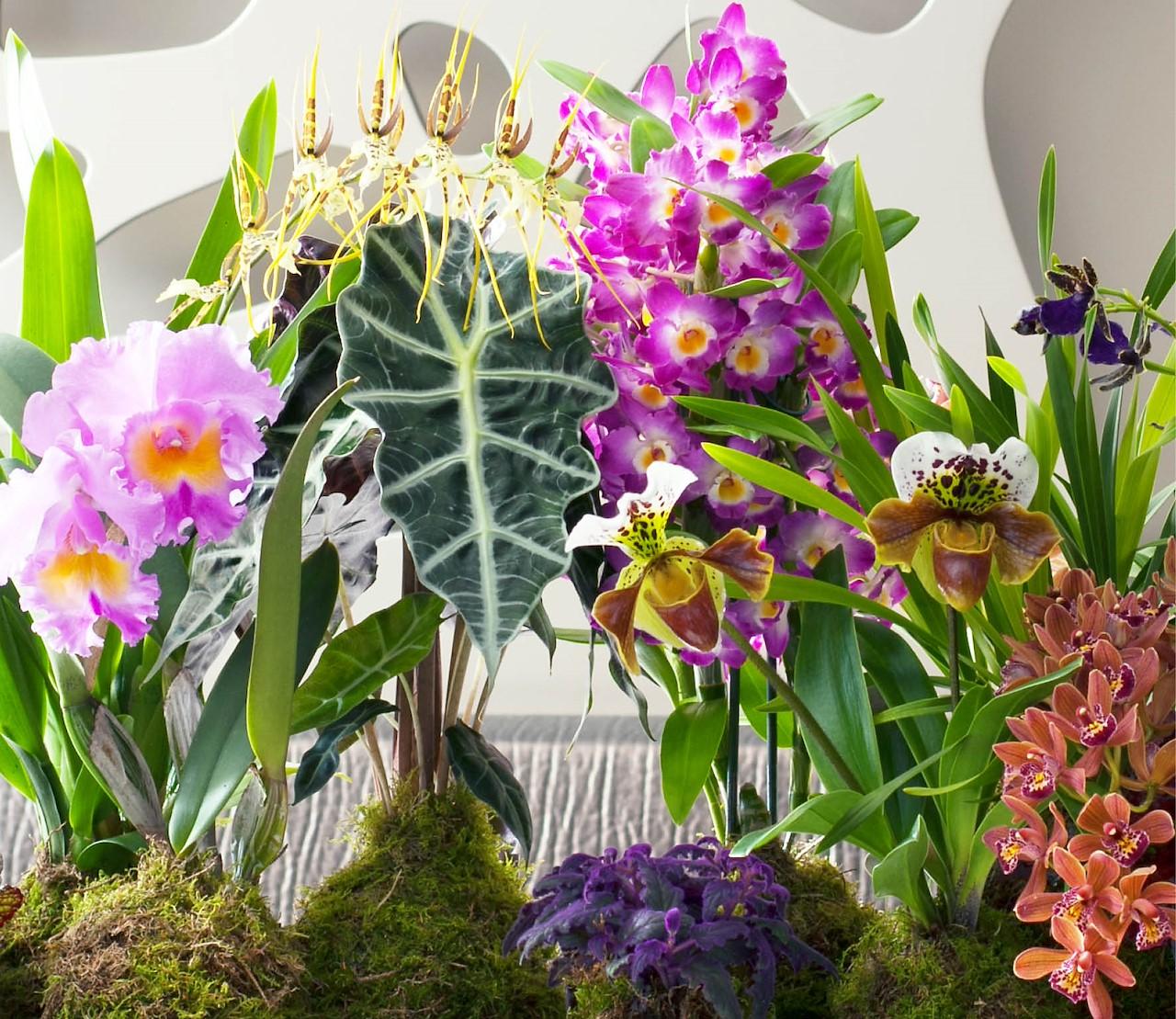 Orchideeën: meer soorten dan je denkt