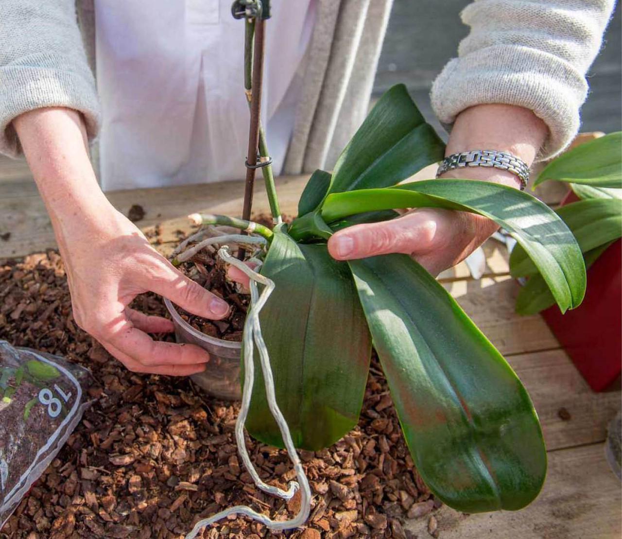 tips & tricks voor orchideeën